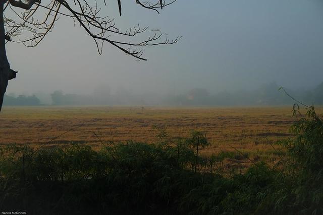 Morning Mist on the Rice Paddies, Doi Saket