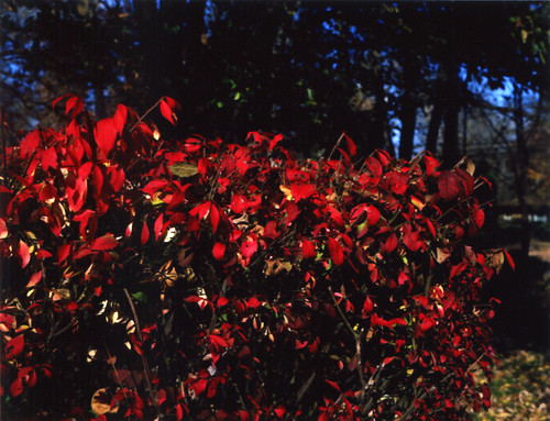 Autumn bush