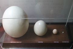 food(0.0), lighting(0.0), sphere(1.0), egg(1.0), egg(1.0),