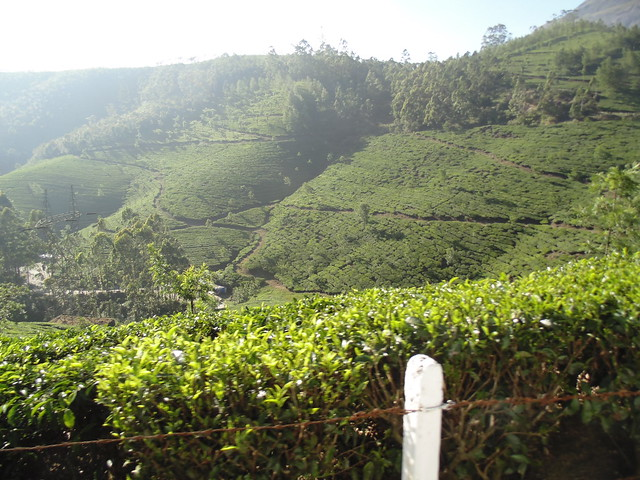 en route to Eravikulam Nationa Park, Munnar