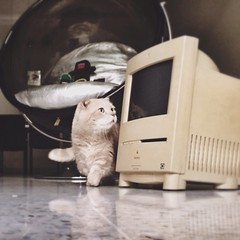 My first Macintosh
