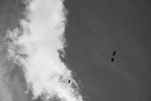 Crows announce snow