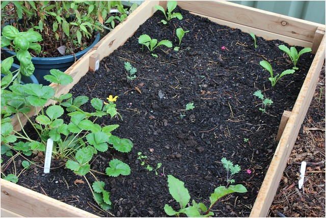 garden bed in use