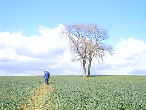 Big field and tree