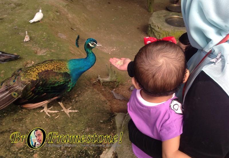 Bagi Haiwan Makan Farm in The City, Seri Kembangan - Kelab Blogger Ben Ashaari