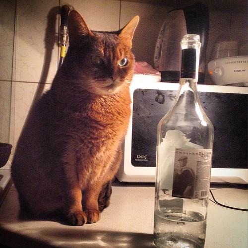 С утра Миуччия контролировала молоко, а вечером интересуется качеством алкогольных напитков. Поборникам нравственности можно не пугаться за мое здоровье, эта бутылка пьется с субботы))) #старыйкрым  #abyssinian