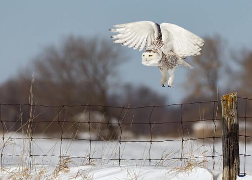 Snowy Angel ❖ Ange des neiges