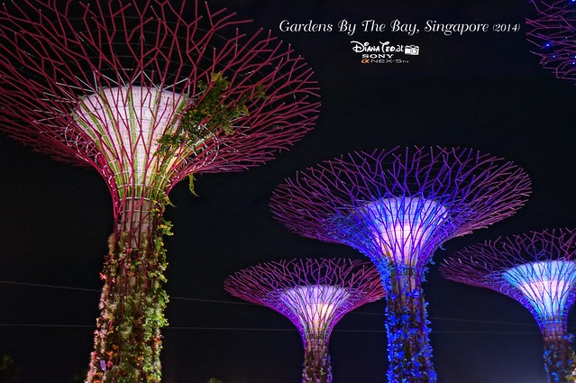 Singapore - Gardens By The Bay 11