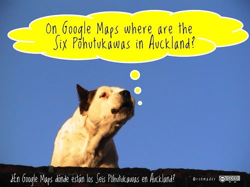 On Google Maps where are the Six Pohutukawas in Auckland? = ¿En Google Maps dónde están los Seis Pohutukawas en Auckland? @LocalAuckland @Pohutukawa6 @timeunlimited #roofdog