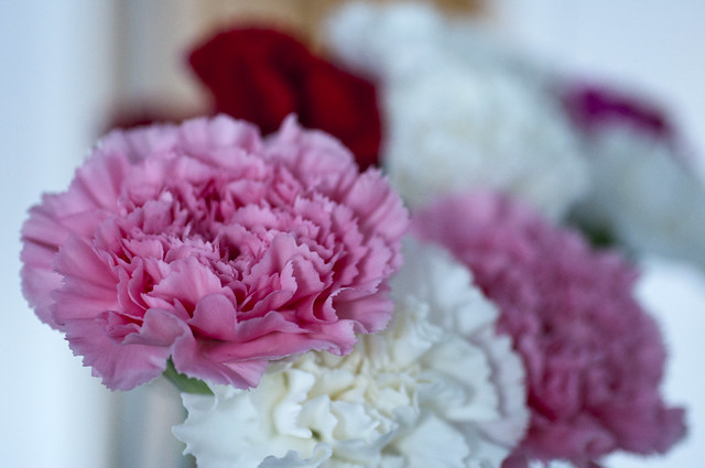 Valentine's Day Carnations