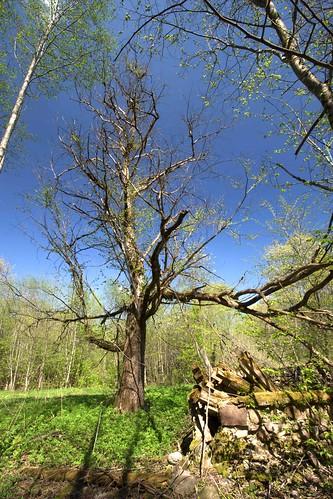 kohtru kevad loodus nature ruins spring varemed