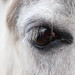 Pony's eye by **Joannie of Arc**