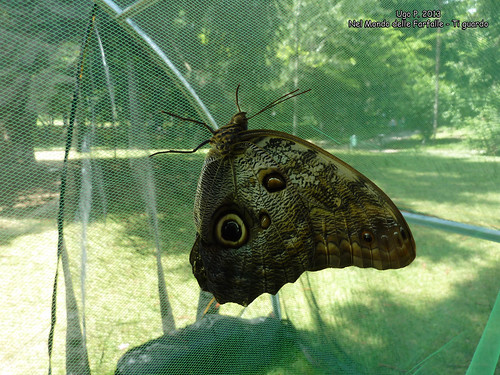 Nel Mondo delle Farfalle - Ti guardo