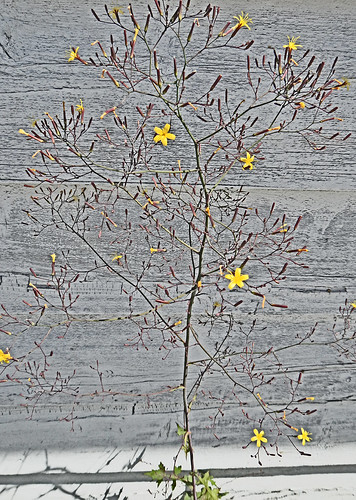 weeds against weathered wood