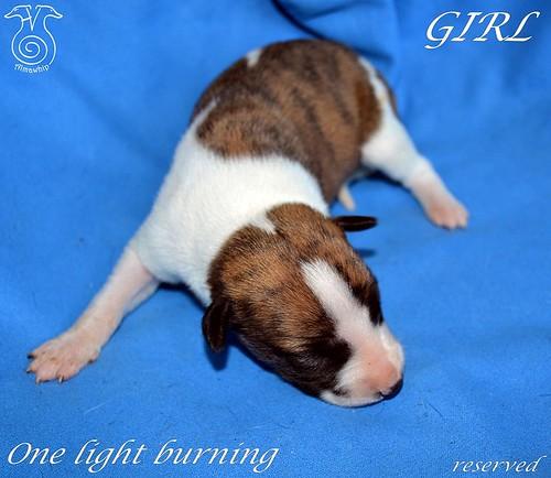 Girl3 One Light burning 1 week