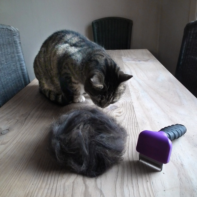 Cat Has Clumps Of Hair On Back
