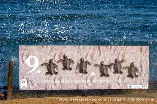 325 días para el mundial: Projeto Tamar