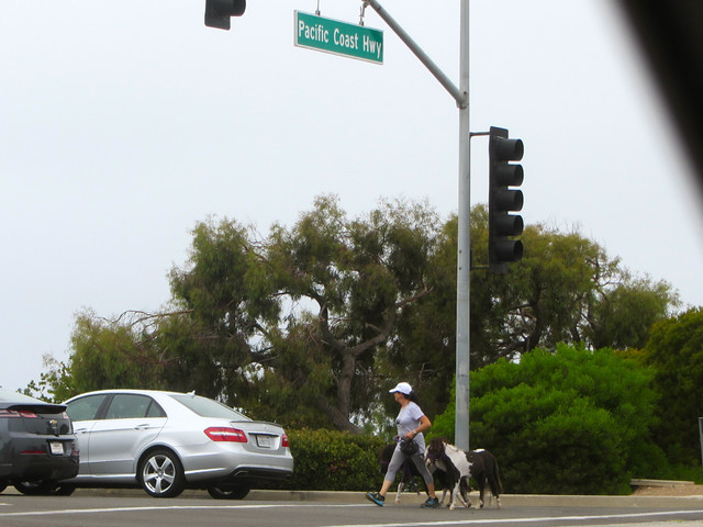 miniature horses on pch