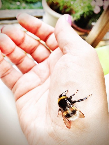 my little bumblebee friend