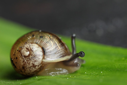 Small snail #2 by Lord V