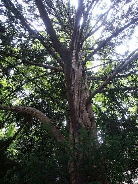 Jardin albert kahn boulogne billancourt un arbre mais l flickr photo sharing - Mobilier jardin hiver boulogne billancourt ...