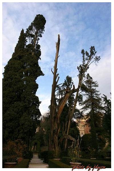 1108880005_造型奇特的古樹