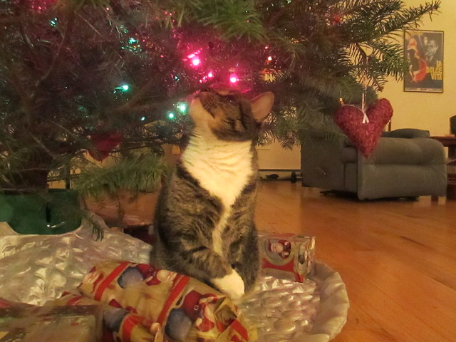 Murderface admiring the tree