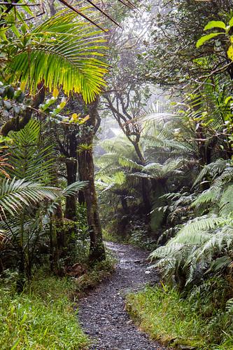 trees naturaleza mist verde green nature fog canon rainforest arboles puertorico hiking foggy trail 7d pr elyunque lush riogrande yunque ríogrande