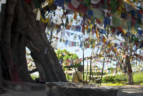 travel trees nepal man travelling asian religious asia day dof buddha candid buddhist flag smoke prayer religion praying monk buddhism flags smoking depthoffield monks devotion nepalese prayerflags devotee devotees pilgrimage buddhisttemple prayers incense pilgrim devoted nepali pilgrims incenseburner buddhists prayerflag shallowdepthoffield southasia buddhistmonks southasian buddhistmonk lumbini candidportraiture rupandehi rupandehidistrict