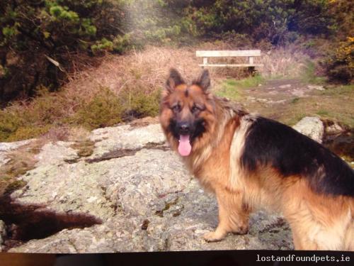 Sun, Jan 26th, 2014 Lost Male Dog - Dunbeggan, Longford
