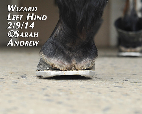 Wizard's New Rocker Shoes