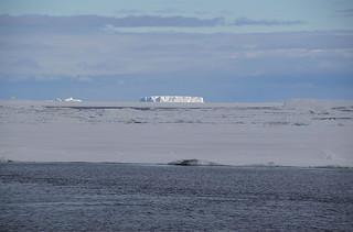 772 Antarctic Sound