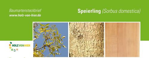 Speierling-Header