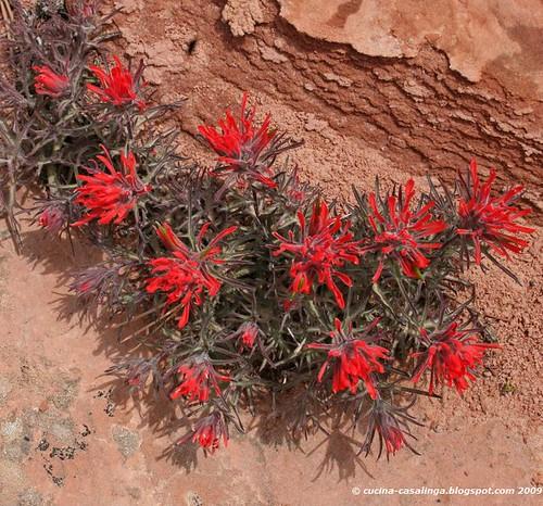 Zion-MountCarmelHighway Blumen