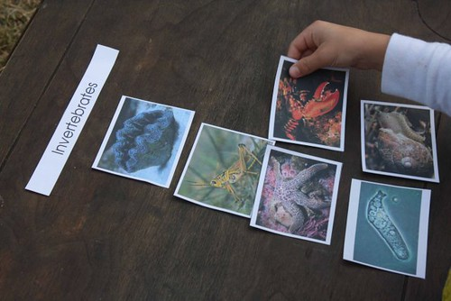 Vertebrate and Invertebrate Sorting (Photo from Montessori MOMents)