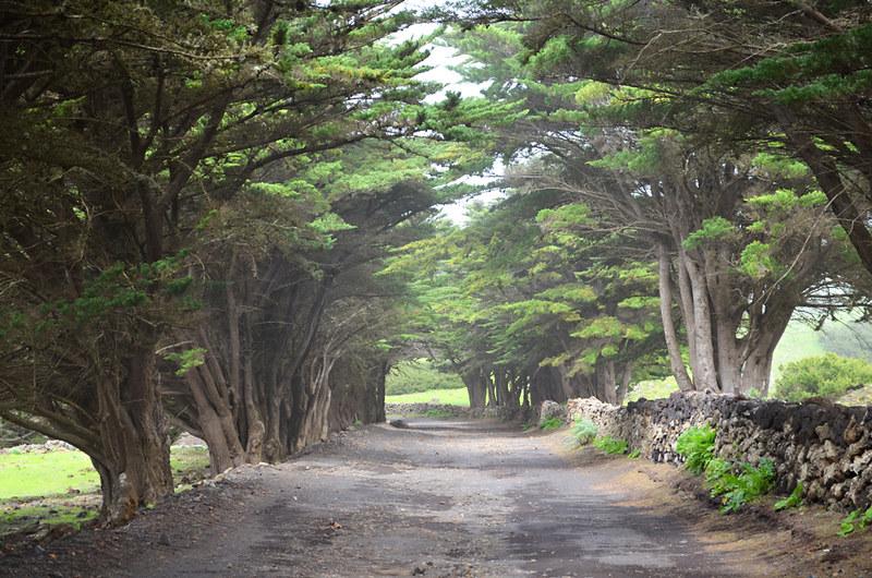 wooded walk, El Hierro, Canary Islands