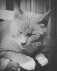 Sleepy boy.