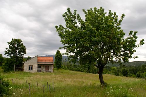 mekagruda tree cloudy green grass