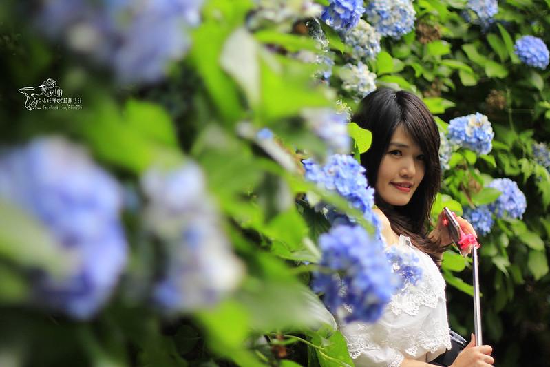 繡球花 (25)