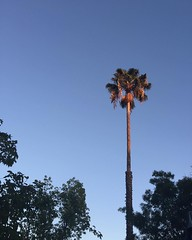 Casa Alma Palm Tree at Sunset. #nofilter