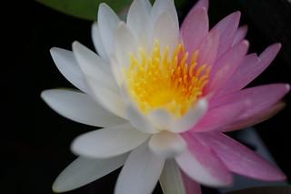 Photo:DSC05230 By:舞桜