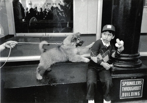 Jill Freedman, Pupsicle, New York City, 1986