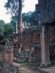Preah Khan - Huge Growth