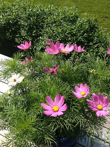 Sweden, wildflowers