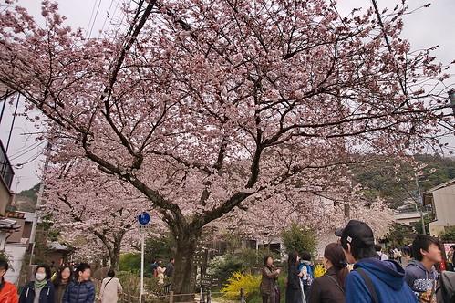 【写真】2013 桜 : 哲学の道/2018-12-24/IMGP9224
