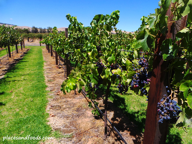 vineyard in adelaide
