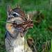 Seney National Wildlife Refuge - Wildlife by Friends of Seney National Wildlife Refuge