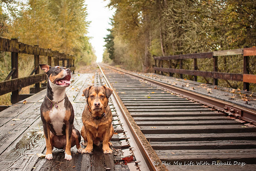 Train Tracks-9521