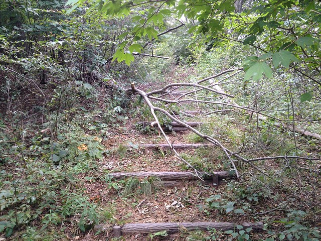 飯盛山 登山道 倒木