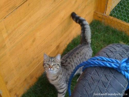 [Reunited] Tue, Oct 15th, 2013 Lost Female Cat - Possibly Travelled A Distance In A Van, Dunlavin - Kildare